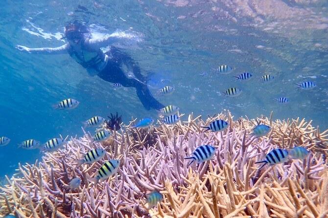 Isla Blanca(アプリット島)の珊瑚礁2